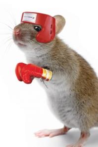 knockout-mouse